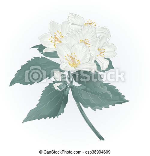 Spring flowers jasmine and buds vectoreps twig spring flower spring flowers jasmine and buds vectoreps mightylinksfo
