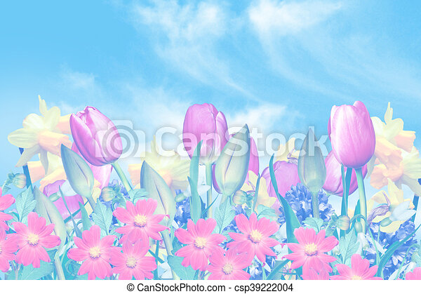 Spring flowers on a background of blue sky with clouds - csp39222004
