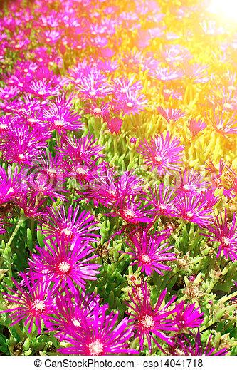 Spring flowers - csp14041718