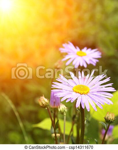 Spring flowers - csp14311670