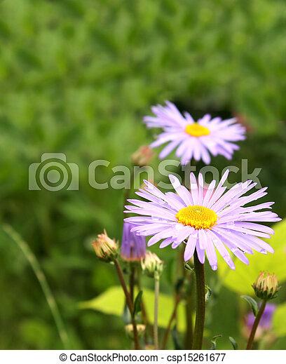 Spring flowers - csp15261677
