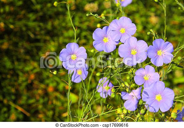 Spring flowers - csp17699616