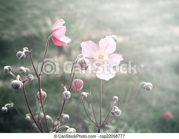 Spring flowers - csp22058777