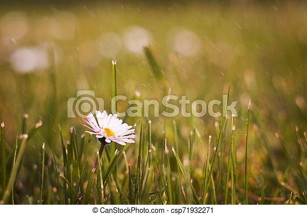 Spring flowers - csp71932271