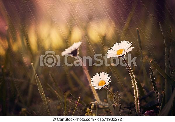 Spring flowers - csp71932272
