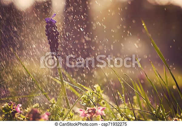 Spring flowers - csp71932275
