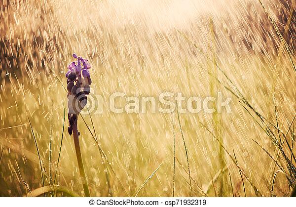 Spring flowers - csp71932319