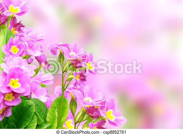 Spring flowers - csp8852761
