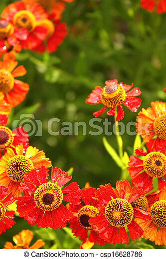 Spring flowers - csp16628786