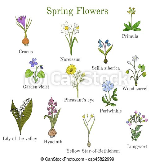 Spring Flowers Set Hand Drawn Botanical Vector Illustration
