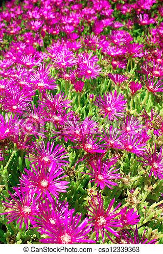 Spring flowers - csp12339363