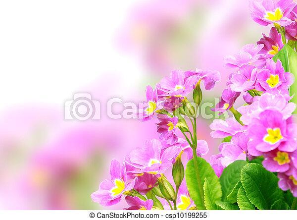 Spring flowers - csp10199255