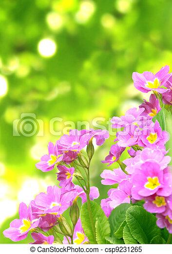 Spring flowers - csp9231265