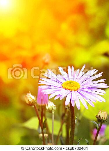 Spring flowers - csp8780484