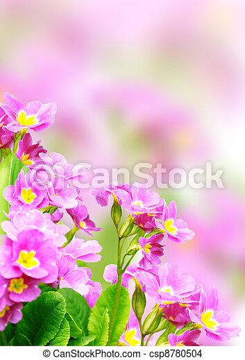 Spring flowers - csp8780504