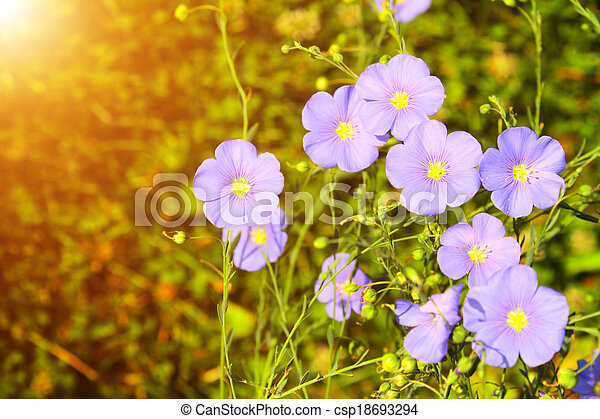 Spring flowers - csp18693294