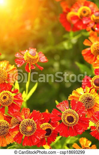 Spring flowers - csp18693299