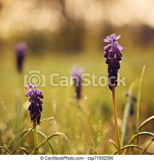Spring flowers - csp71932390
