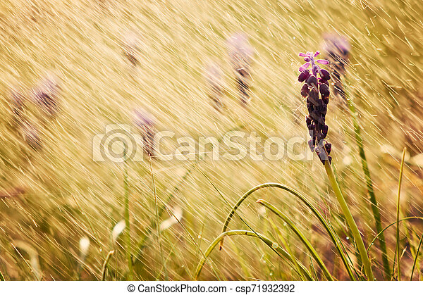 Spring flowers - csp71932392