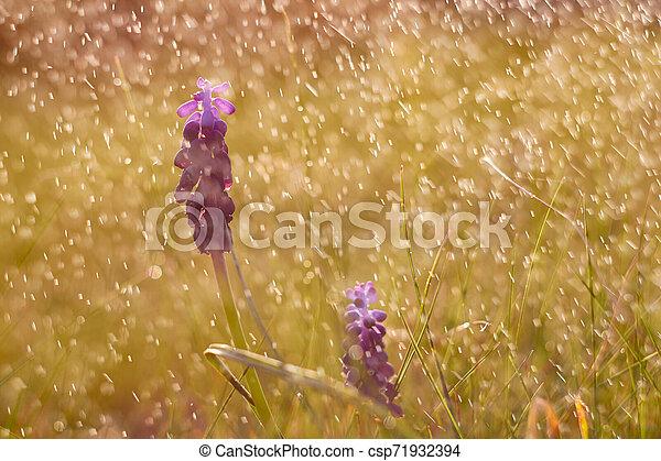 Spring flowers - csp71932394