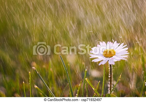 Spring flowers - csp71932497