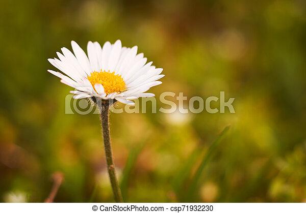 Spring flowers - csp71932230