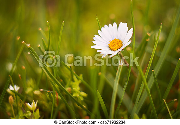 Spring flowers - csp71932234