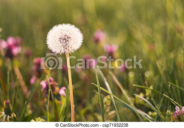 Spring flowers - csp71932238