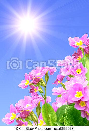 Spring flowers - csp8685973