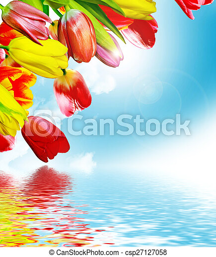Spring flowers tulips on the background of blue sky with clouds - csp27127058