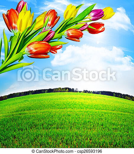 Spring flowers tulips on the background of blue sky with clouds - csp26593196