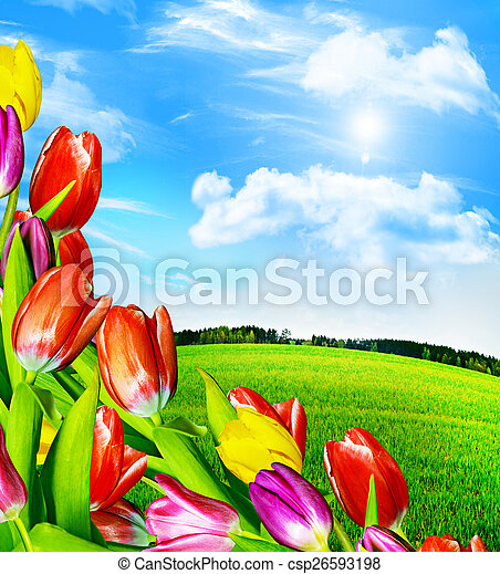 Spring flowers tulips on the background of blue sky with clouds spring flowers tulips on the background of blue sky with clouds csp26593198 mightylinksfo