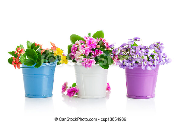 spring flowers with green leaves in bucket - csp13854986