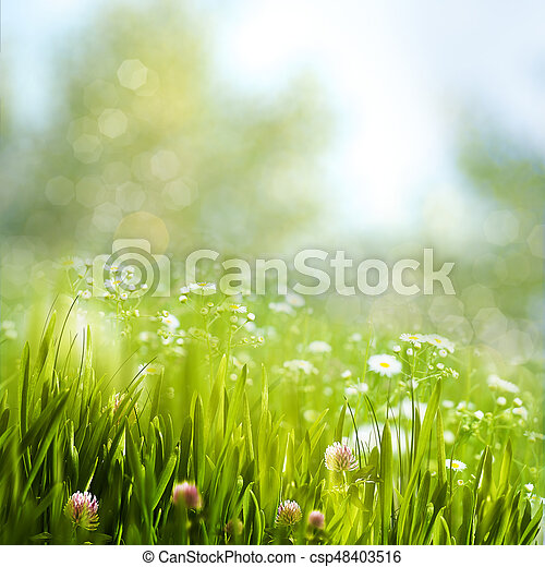 Spring foliage with daisy flowers, beauty natural backgrounds - csp48403516