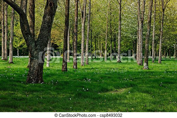 Spring forest - csp8493032