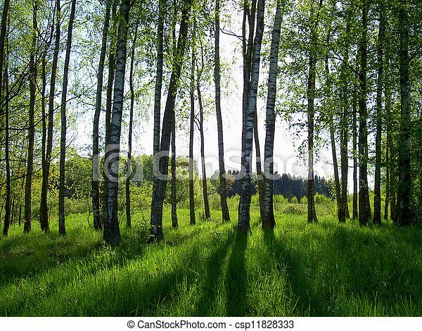spring forest - csp11828333
