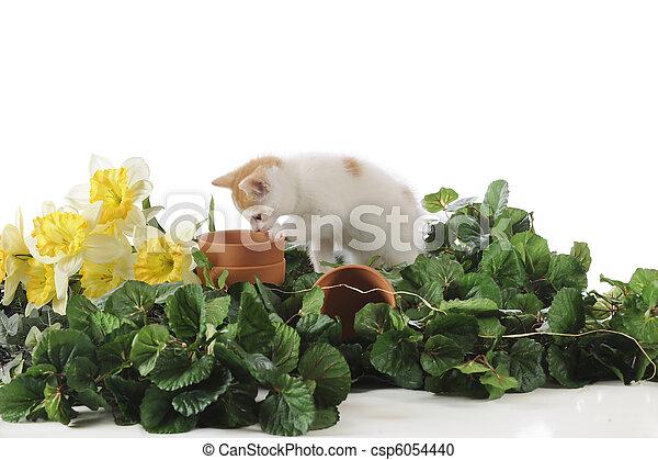Spring Garden Kitty - csp6054440