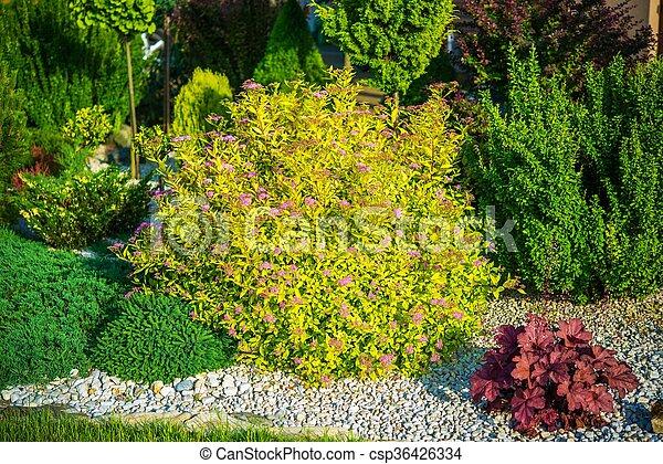 Spring Garden Plants - csp36426334