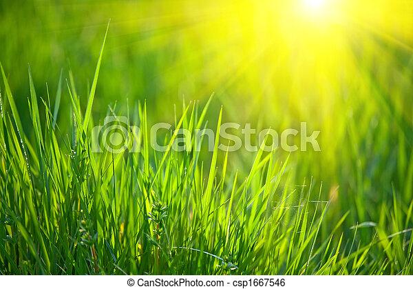 spring grass - csp1667546