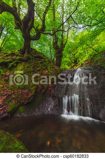 Spring green forest at Gorbea Natural Park - csp60182833