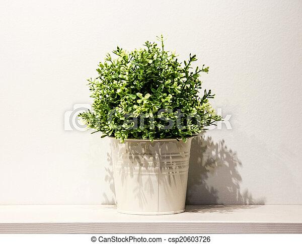 Spring green house plant in a white metal pot on white shelf - csp20603726