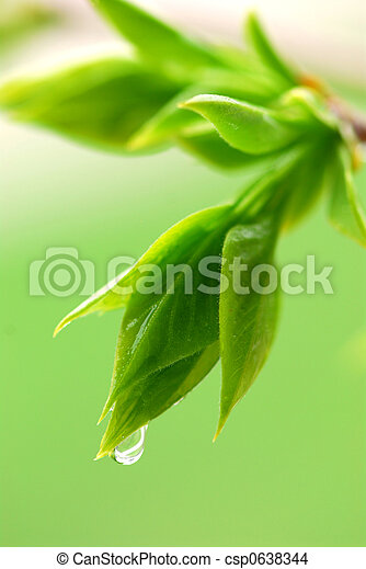 Spring green leaves - csp0638344