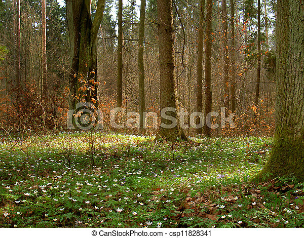spring in forest - csp11828341