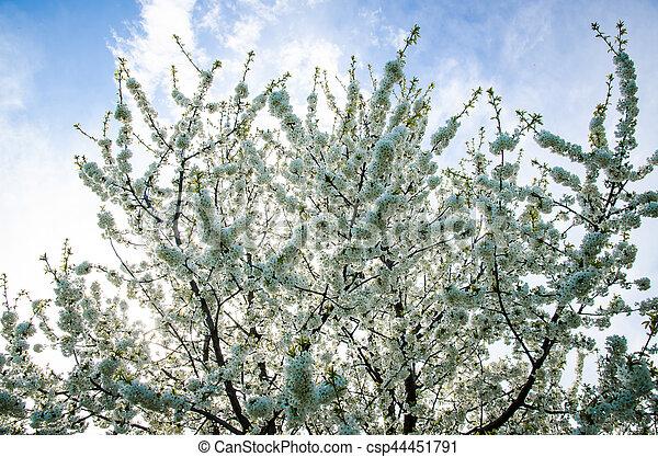spring in nature - csp44451791