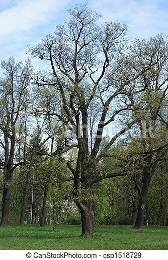Spring in old park - csp1518729