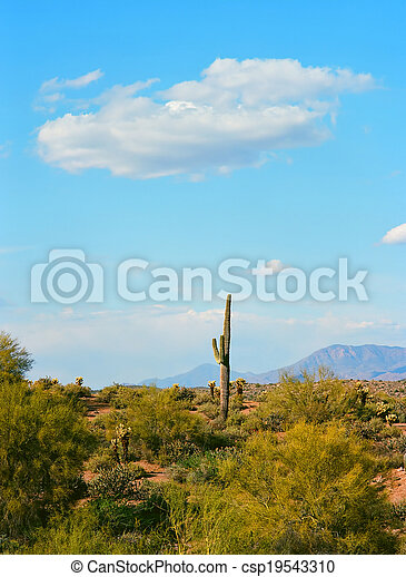 Spring In The Desert - csp19543310