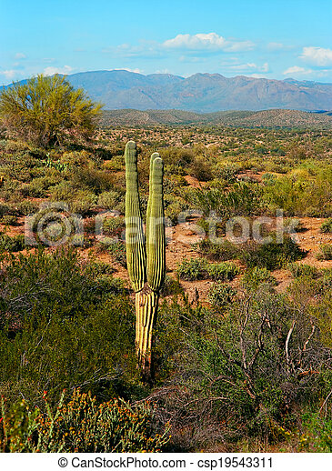 Spring In The Desert - csp19543311