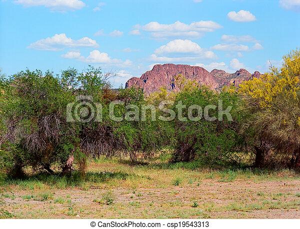 Spring In The Desert - csp19543313