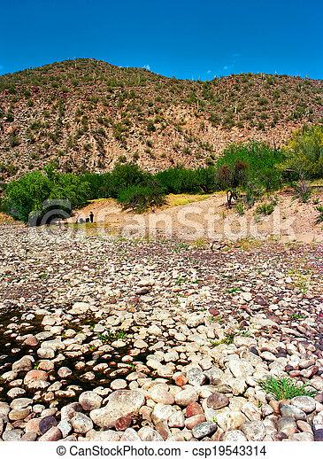 Spring In The Desert - csp19543314