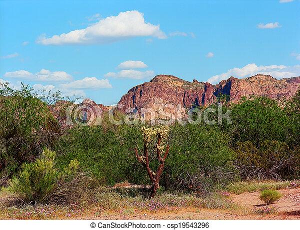Spring In The Desert - csp19543296